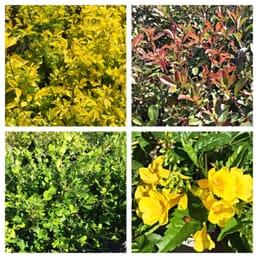 Photo Of Bay Area Landscape Nursery Corpus Christi Tx United States