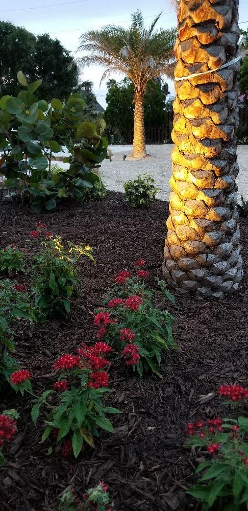 Florida Pro Lawn Care: 1015 Atlantic Blvd, Atlantic Beach, FL