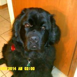 Lazy J S Doggie Spa New Lisbon Wi