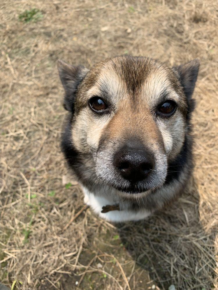 Walk My Dog: Essex, VT