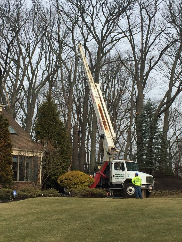 Accurate Tree Service: 1910 Stratford Ave, Neptune, NJ