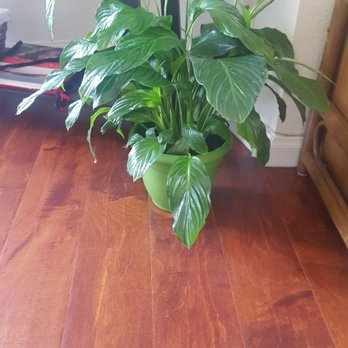 Photo Of East Bay Nursery Berkeley Ca United States Peace Lily