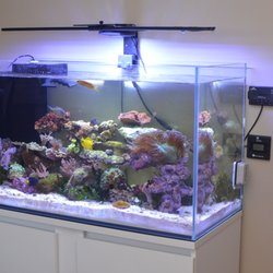 Carson Tropical Fish - 2019 All You Need to Know BEFORE You Go (with