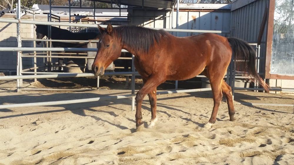 Compton Jr Posse Youth Equestrian Program 33 Photos