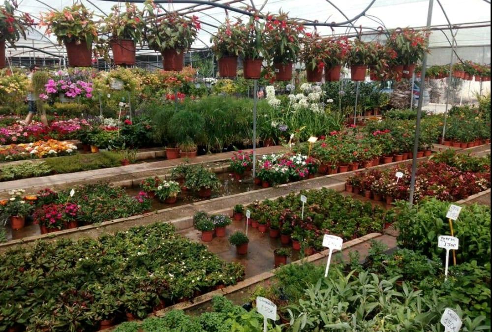 vivero aznaljarafe - nurseries & gardening - camino de las erillas