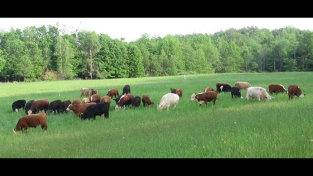 Steve Normanton Grass-fed Beef: 55 Charles Bancroft Hwy, Litchfield, NH