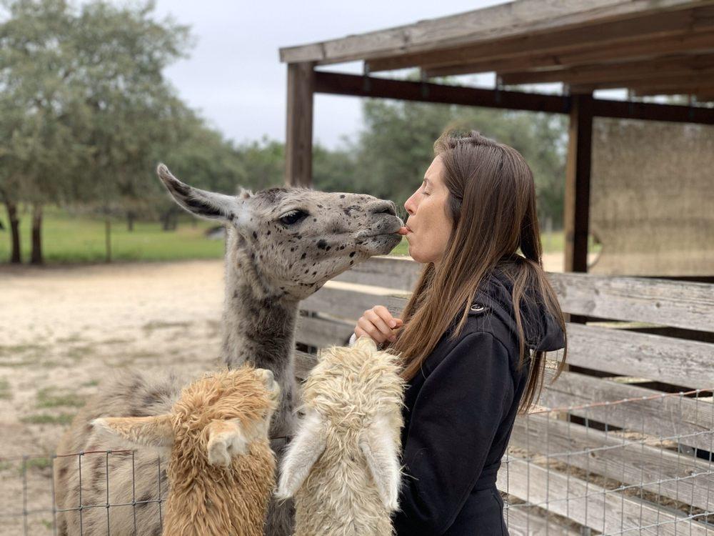 LunaSea Alpaca Farm: 18810 Lone Dove Ln, Clermont, FL