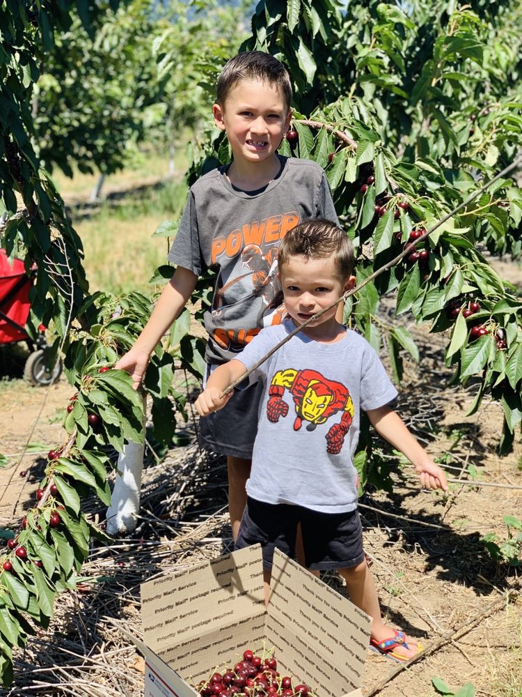 Root Orchards: 1111 Root Rd, Mosier, OR