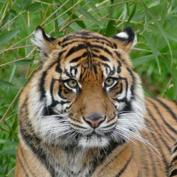 Point Defiance Zoo & Aquarium - (New) 1037 Photos & 370 Reviews