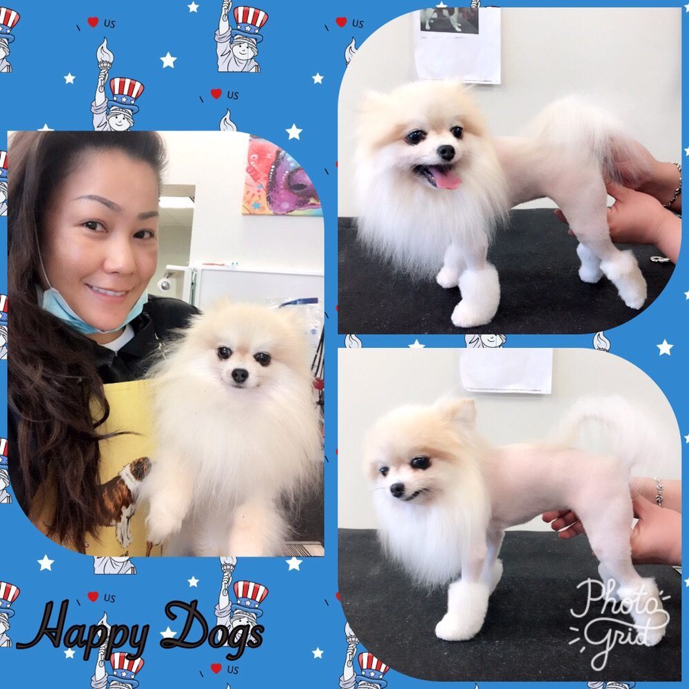 Happy Dogs Grooming: 5002 Bissonnet St, Bellaire, TX