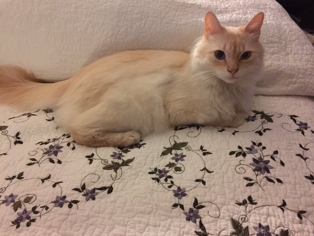 Susan's Cats and Kittens: Churchville, PA