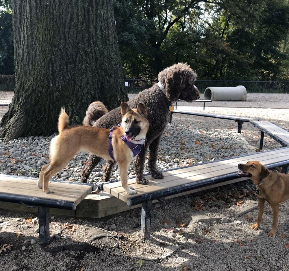 Thorndike Field Dog Park