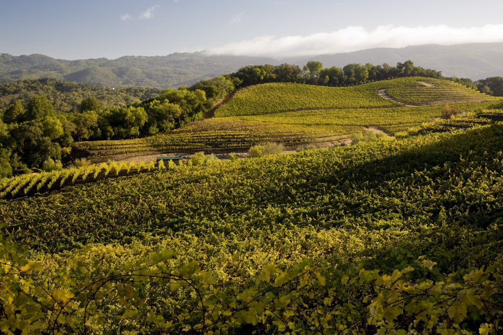 Benziger Family Winery: 1883 London Ranch Rd, Glen Ellen, CA