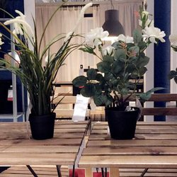 Photo Of IKEA   Draper, UT, United States. Flowers