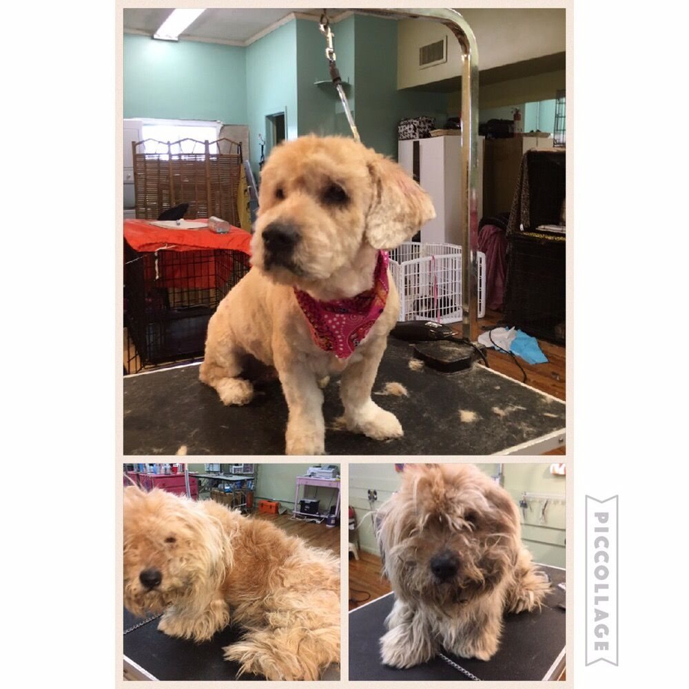 Hollywoof Grooming Salon: 352 Atlantic Ave, Freeport, NY