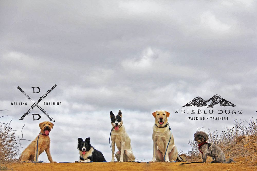Diablo Dog Walking & Training: Pleasant Hill, CA