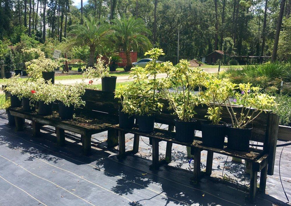 Bartram Trail Nursery: 1859 State Road 13, Jacksonville, FL