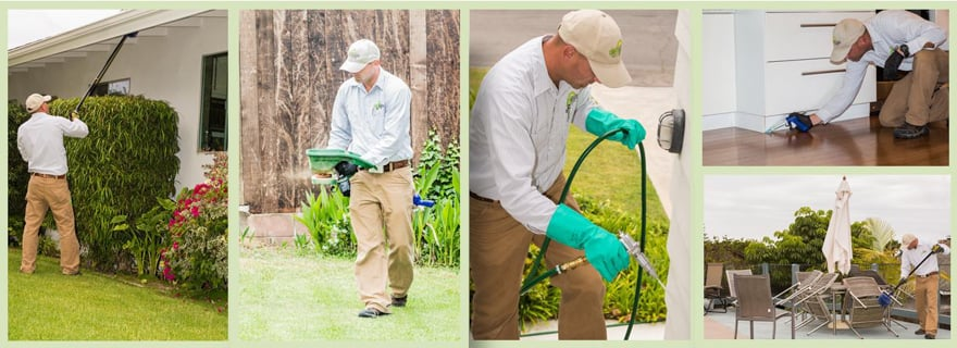 Green Flash Pest Control