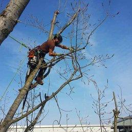 Baumpflege  Baumpflege Kletterkollektiv - 10 Photos - Tree surgeons ...