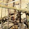 El Paso Zoo
