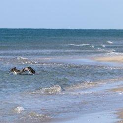 Photo Of Atlantic Dunes Park Delray Beach Fl United States Brown Pelican