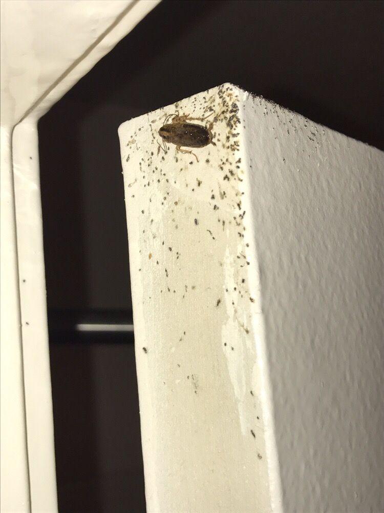 Phoenix Pest Control: 298 E Columbia St, Danville, IN