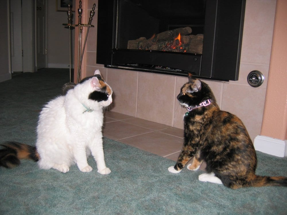Schmoozing in front of the new Malm Fireplace Insert - Yelp