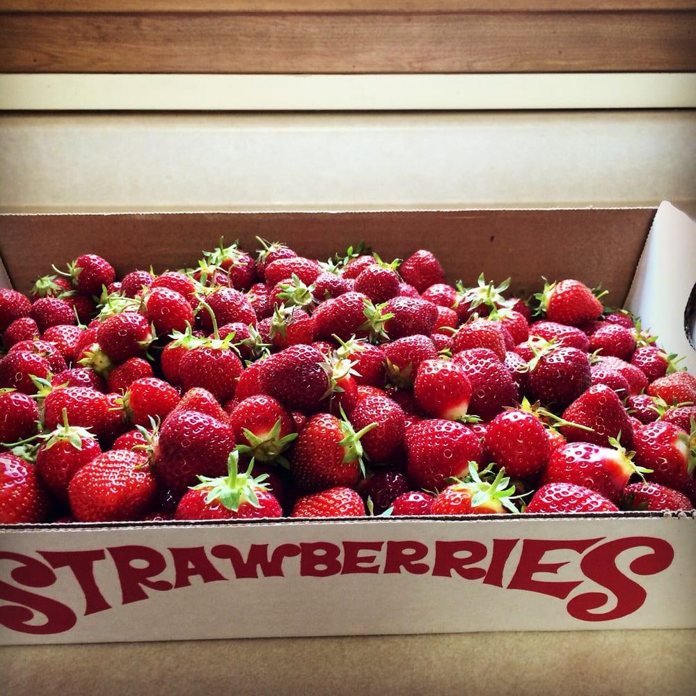 Bauer Berry Farm: 10830 French Lake Rd, Champlin, MN