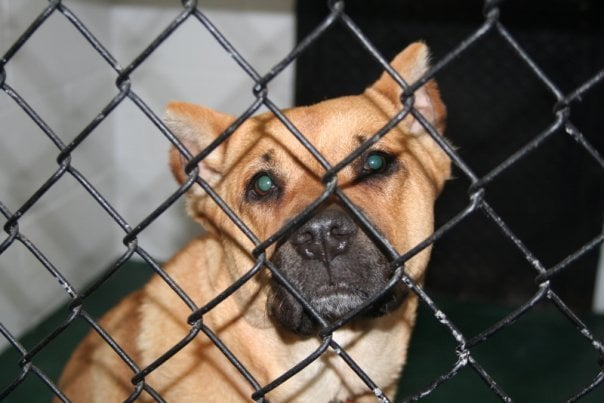 Humane Society of Griffin-Spalding County: Experiment, GA