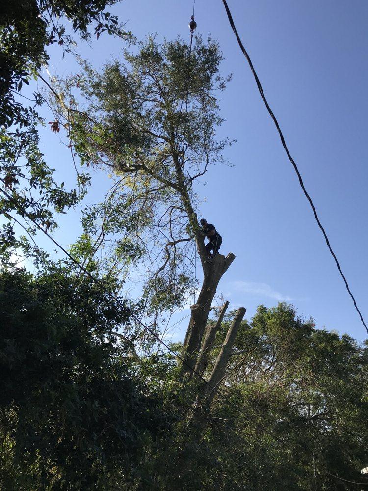 Harvey Tree Service: Lake Wales, FL