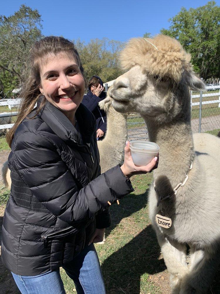 Golden Spirit Alpaca Ranch: 10937 Tarpon Springs Rd, Odessa, FL