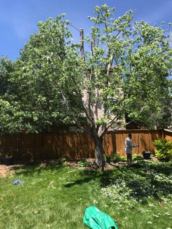 Sam's Landscaping: Lakewood, CO