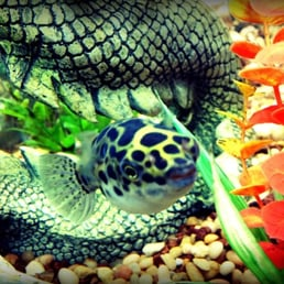 Phoenix tropical fish 44 reviews local fish stores for Fish stores in arizona