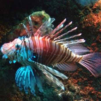 aquadom sea life centre 114 fotos 137 beitr ge aquarium spandauer str 3 mitte. Black Bedroom Furniture Sets. Home Design Ideas