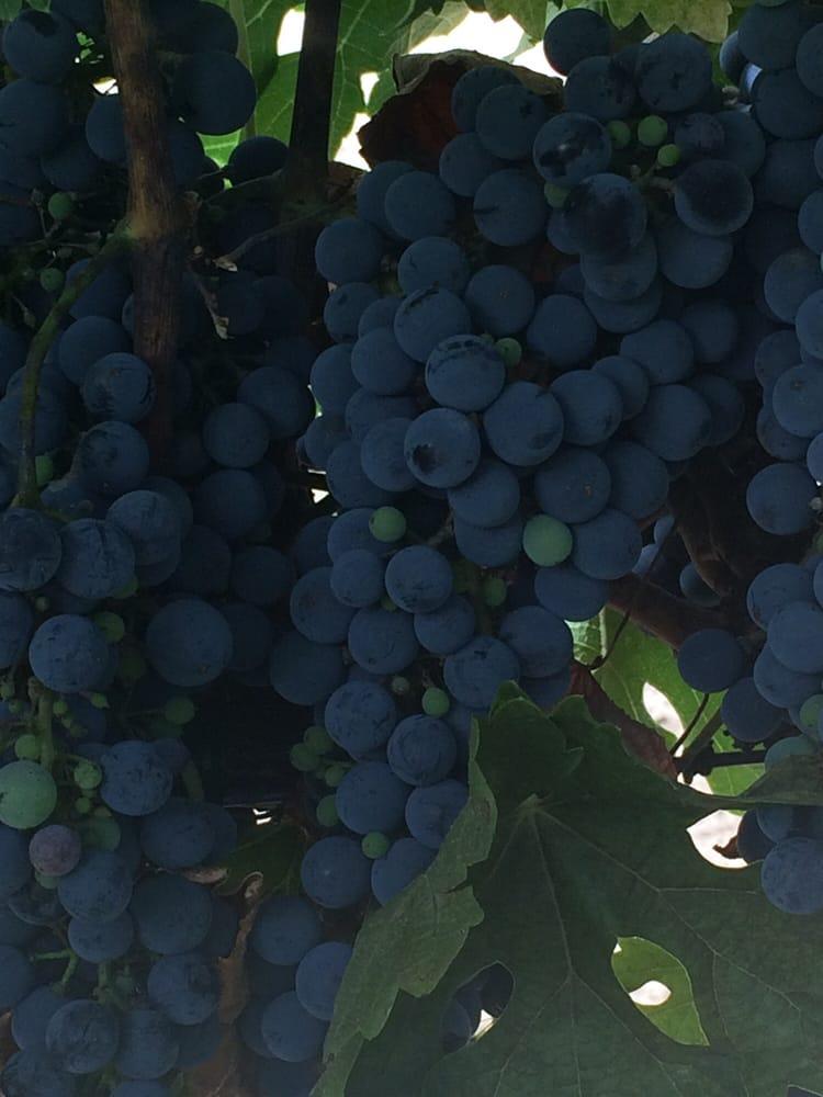Emerald Creek Winery: 38642 Hwy 79, Warner Springs, CA