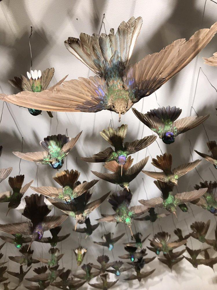 Social Spots from Harvard Museum of Natural History