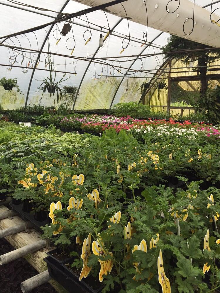 Bonnie's Greenhouse: 5198 Orchard Ln, Waco, TX