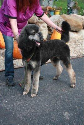 Oak Hill Farm Standard Poodles Portage, WI Pet Shops - MapQuest