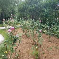 Photo Of Botanical Gardens U0026 Garden Center   Savannah, GA, United States ...