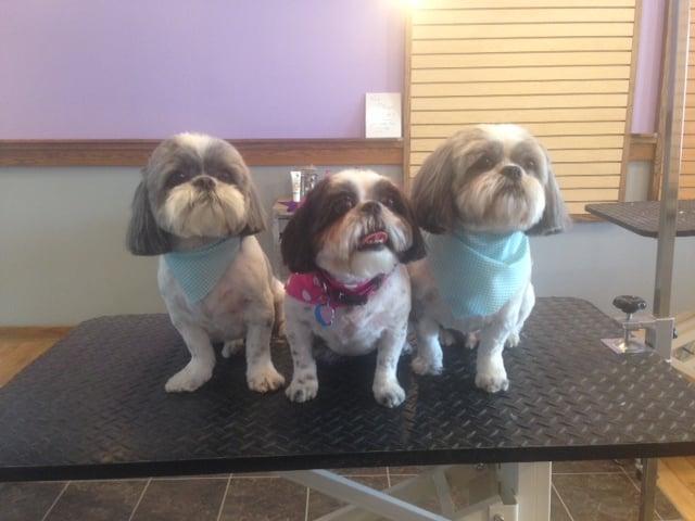 preschool rapid city sd 4 paws grooming amp daycare 寵物美容師 544 century rd rapid 638
