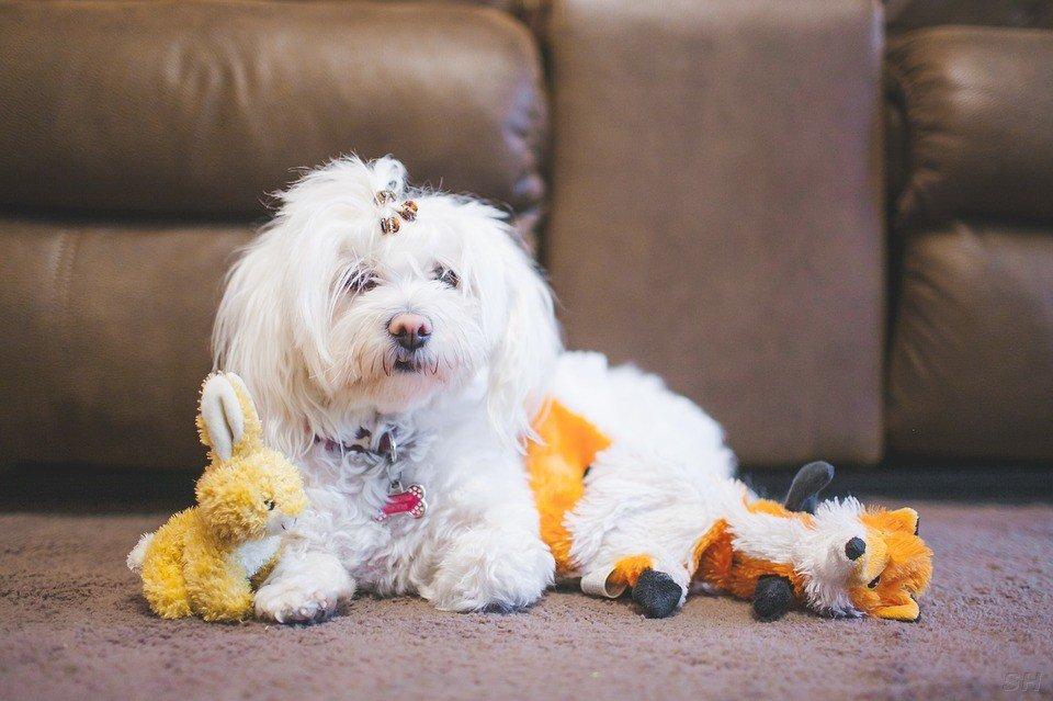 Lisa's Pet Salon and Doggy Daycare