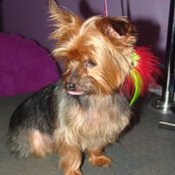 Another doggone salon toletta per animali 2423 for Abaca salon harrisburg pa