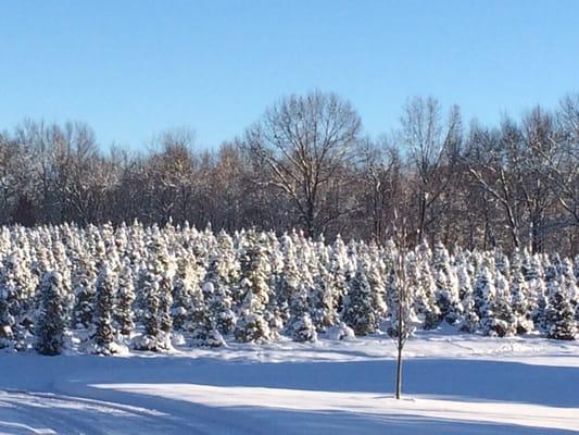 Carpenter Tree Farm - Attraction Farms - 11243 Barnes Rd ...