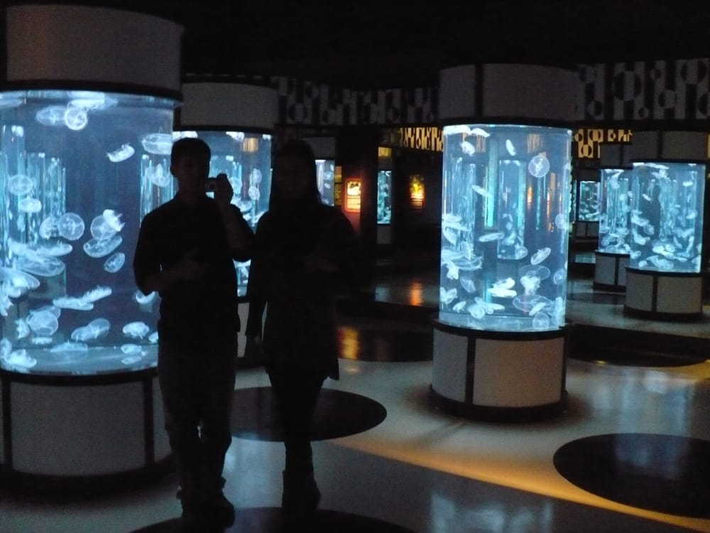 Jellies Experience At The Monterey Bay Aquarium Closed