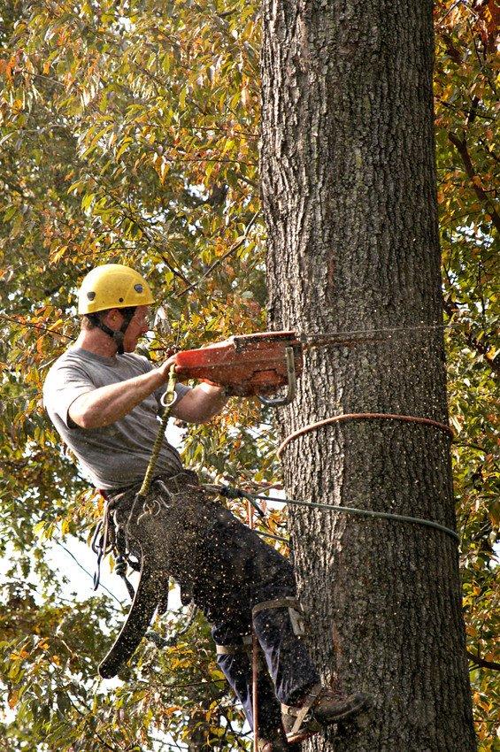 Oak Tree Service: 102 E Halley Ln, Central Islip, NY