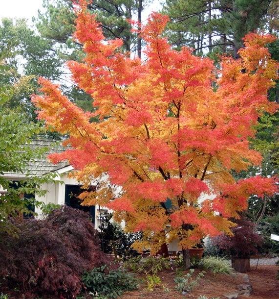 Photo Of Homewood Nursery Garden Center Raleigh Nc United States Sango