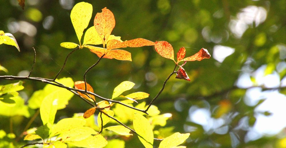 Gardiner County Park: Montauk Hwy, West Bay Shore, NY