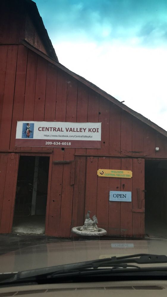 Central Valley Koi