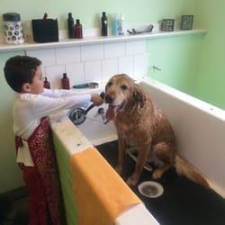 Animal house self service dog wash pet groomers 10121 w photo of animal house self service dog wash kennewick wa united states solutioingenieria Gallery