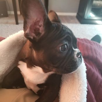 Puppy Spot - 18 Photos & 54 Reviews - Pet Stores - 22